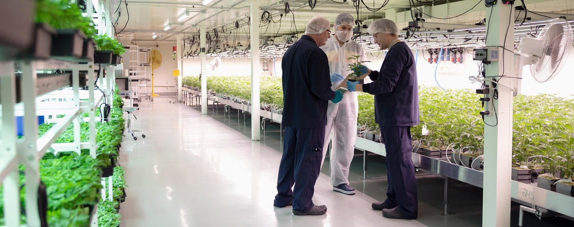 How You Could Make Up to $250,000 a Year Working in the Cannabis Industry