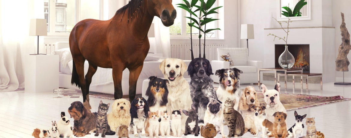 Which Pets Are the Most Expensive to Own?